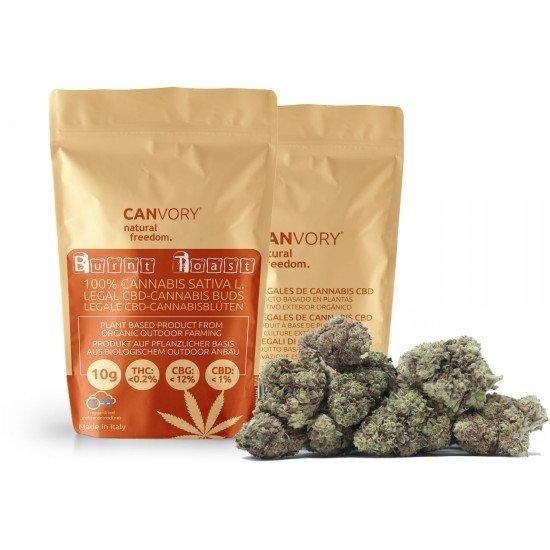 Burnt Toast - 12 CBG freeze-dried Cannabigerol Cannabis Buds, 2 gram - CANVORY
